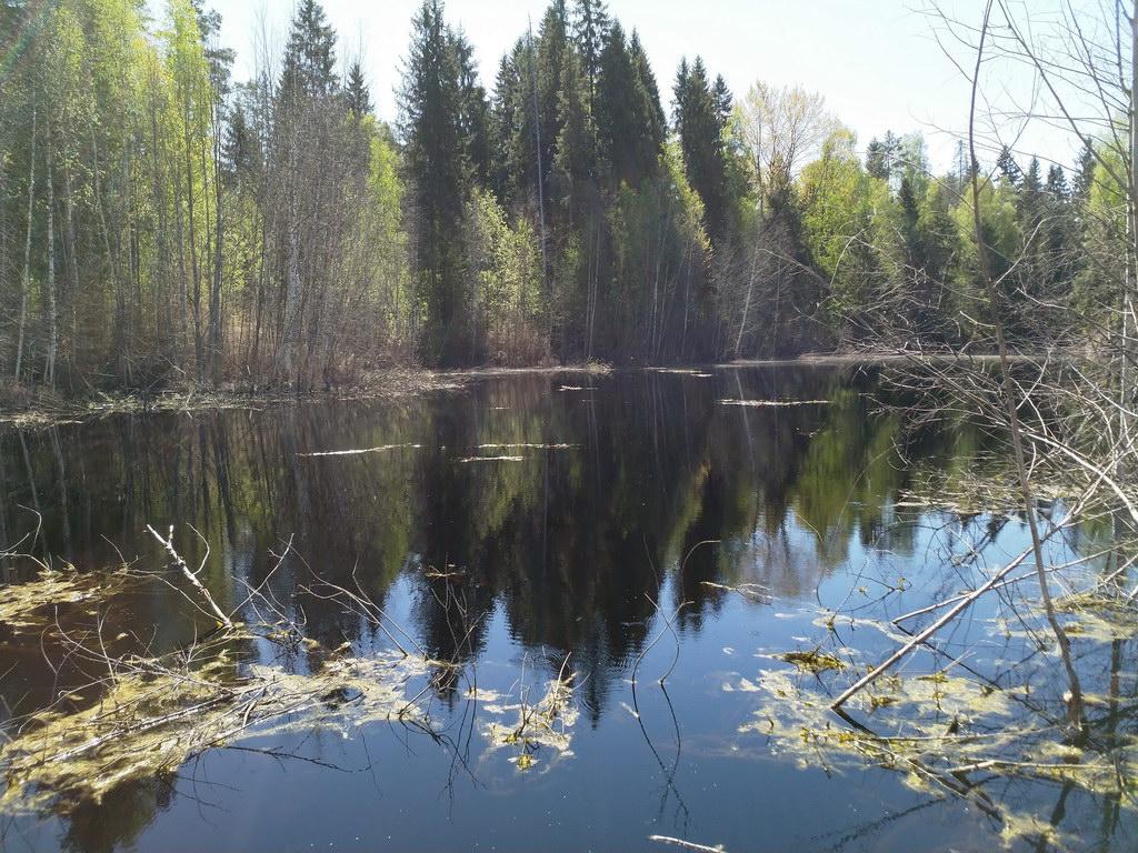 Карстовые озера. Хвойнинский район